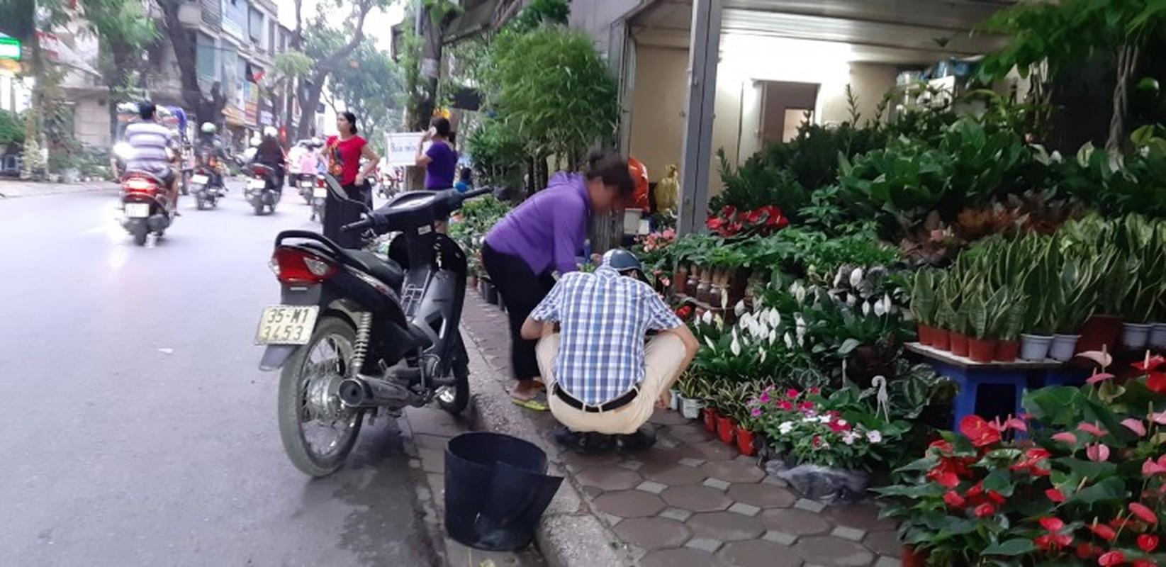 Lon xon cho hoa, cay canh tren duong Hoang Hoa Tham-Hinh-2