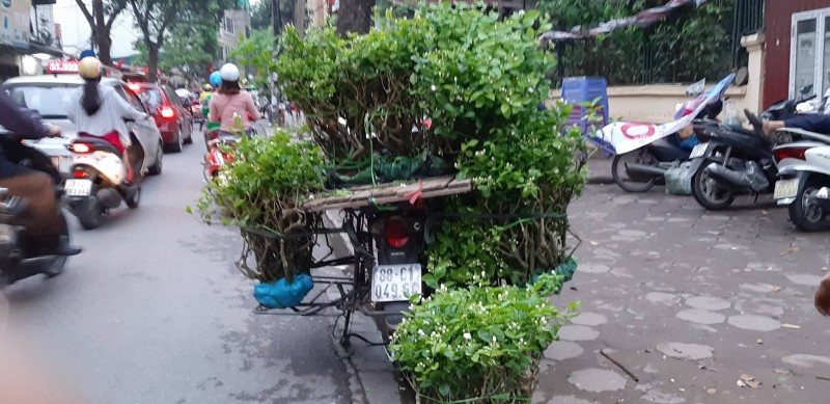 Lon xon cho hoa, cay canh tren duong Hoang Hoa Tham-Hinh-3