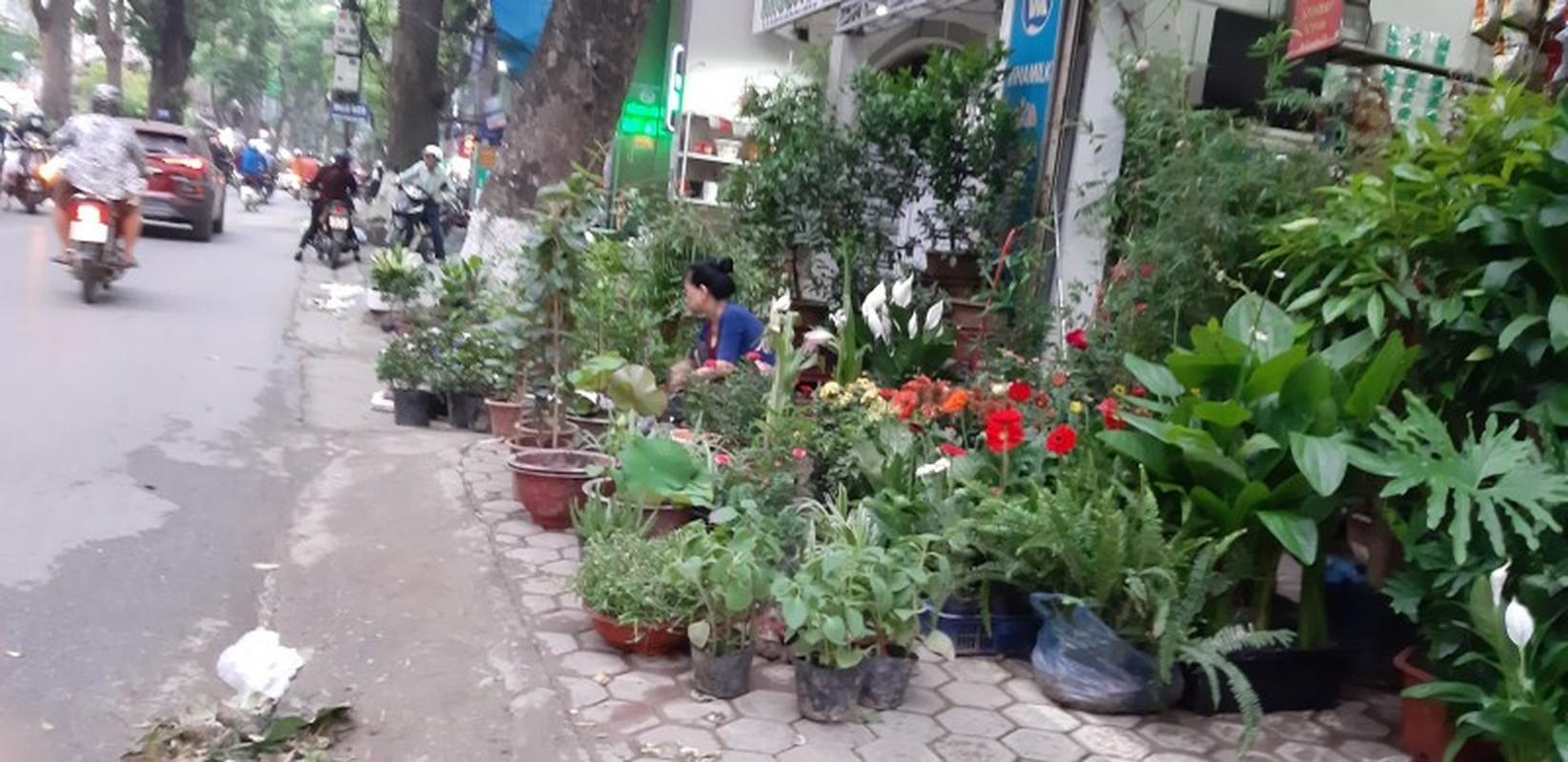 Lon xon cho hoa, cay canh tren duong Hoang Hoa Tham