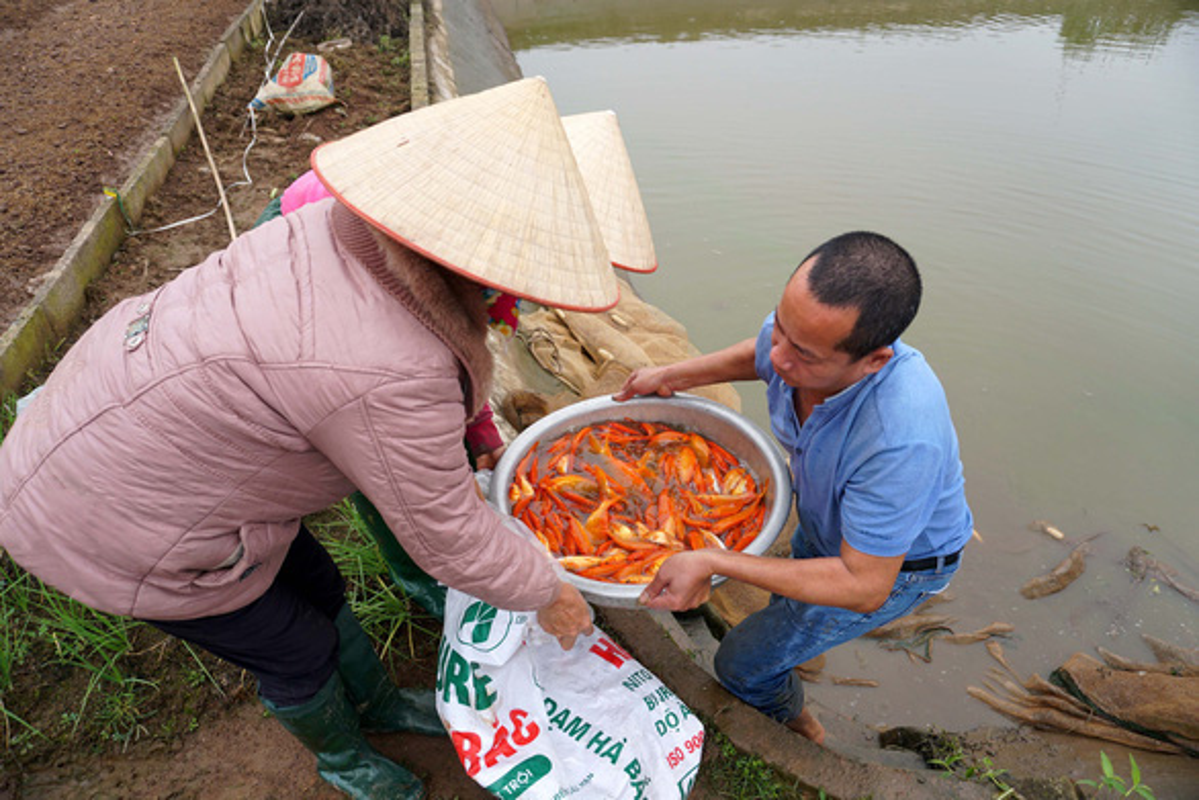 Can canh lang ca chep tat bat voi Tet ong Cong, ong Tao-Hinh-3