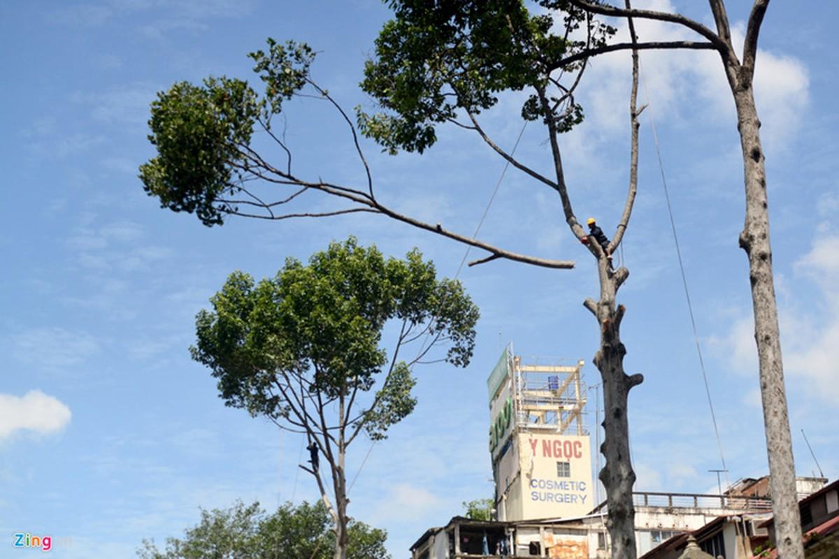 Anh: Don hang dau tren 50 nam tuoi o trung tam Sai Gon-Hinh-2