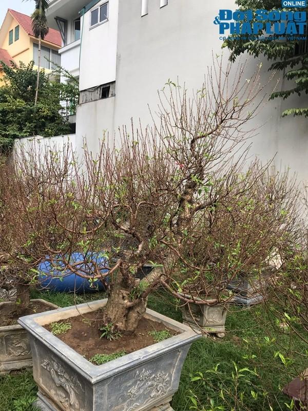 Dao, buoi canh dua nhau xuong pho cho don Tet 2020-Hinh-4