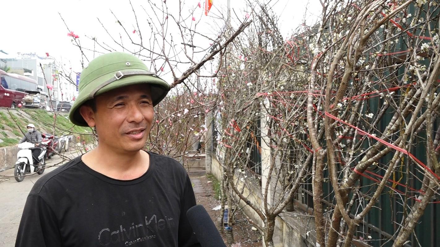 Hoa mo rung trang muot, hang la hut khach choi Tet-Hinh-2