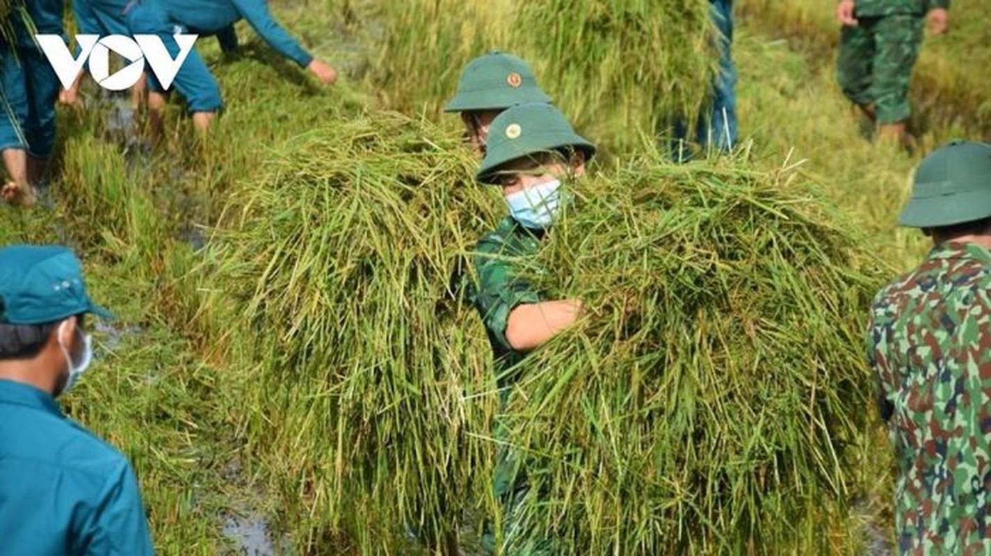 Bo doi gat lua giup nguoi dan vung gian cach theo Chi thi 16-Hinh-6