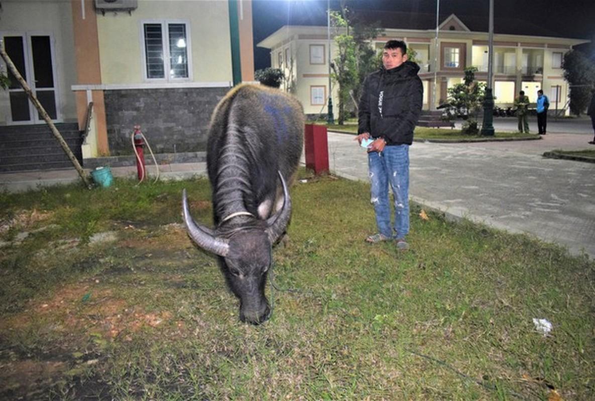 Tin nong ngay 21/1: Khong xin duoc tien, chong bo thuoc chuot dau doc vo-Hinh-6