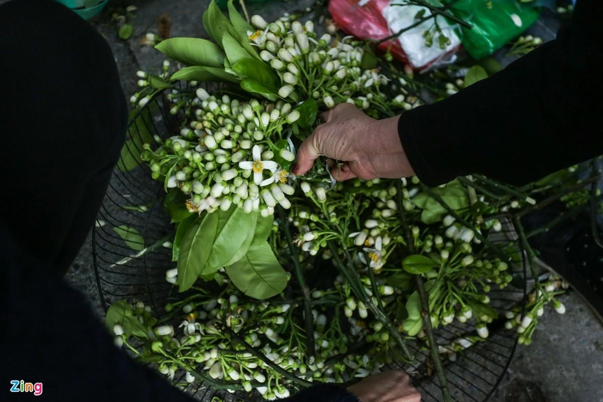Chen nhau mua ga ngam hoa hong cung giao thua-Hinh-12