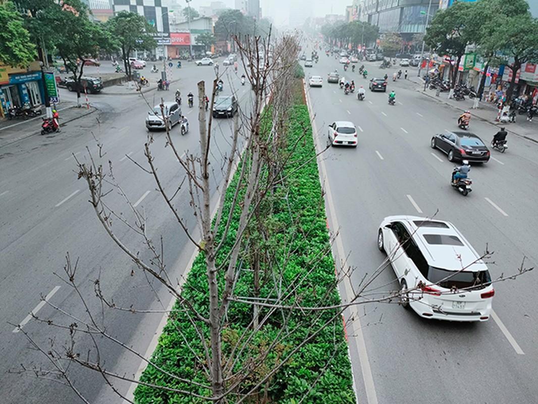 Hang phong la do kho heo, xac xo tren duong Tran Duy Hung - Ha Noi-Hinh-2