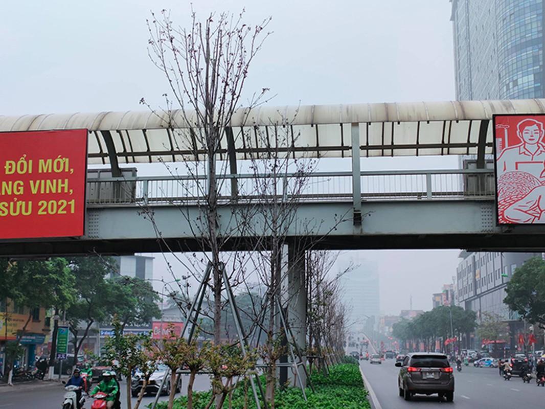 Hang phong la do kho heo, xac xo tren duong Tran Duy Hung - Ha Noi