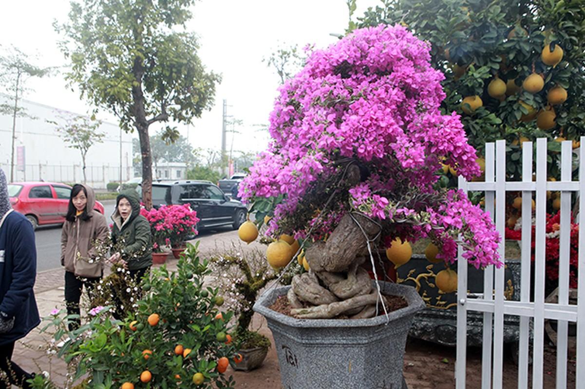 Bonsai hoa giay Thai Lan hong ruc, gia chuc trieu van hut khach Ha thanh-Hinh-11