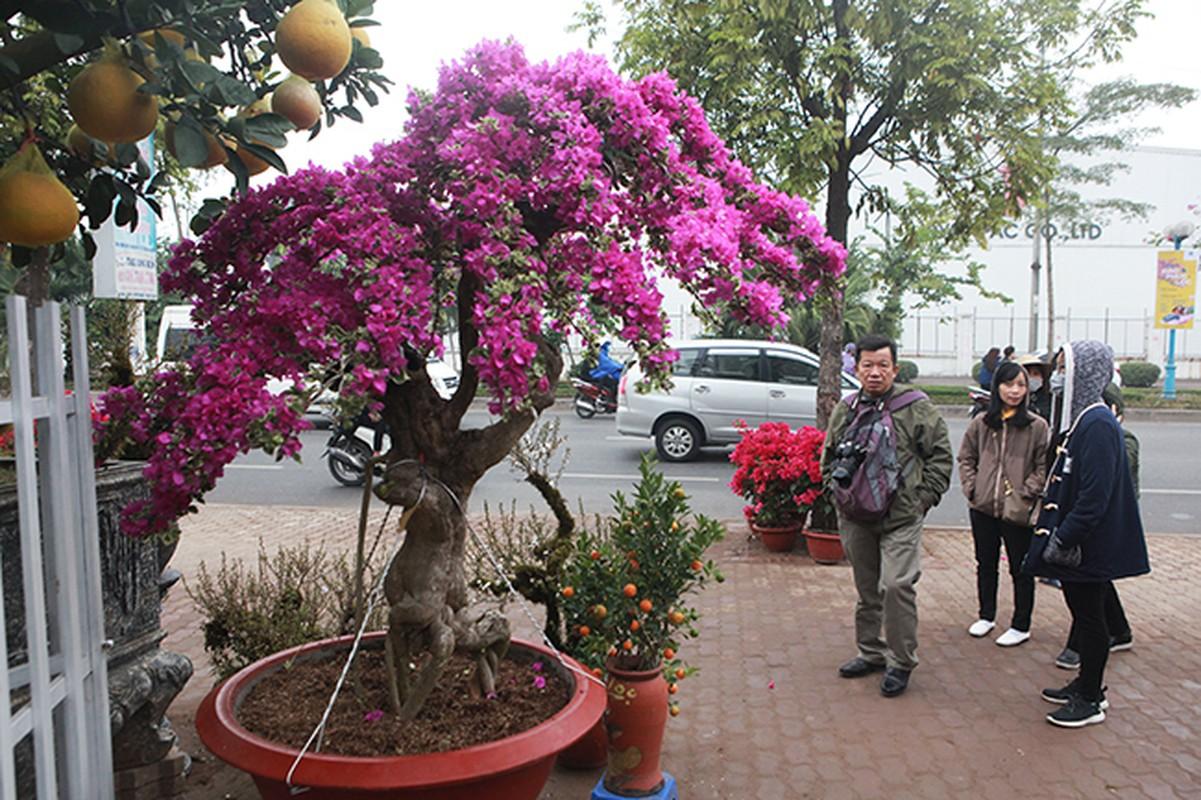 Bonsai hoa giay Thai Lan hong ruc, gia chuc trieu van hut khach Ha thanh-Hinh-12