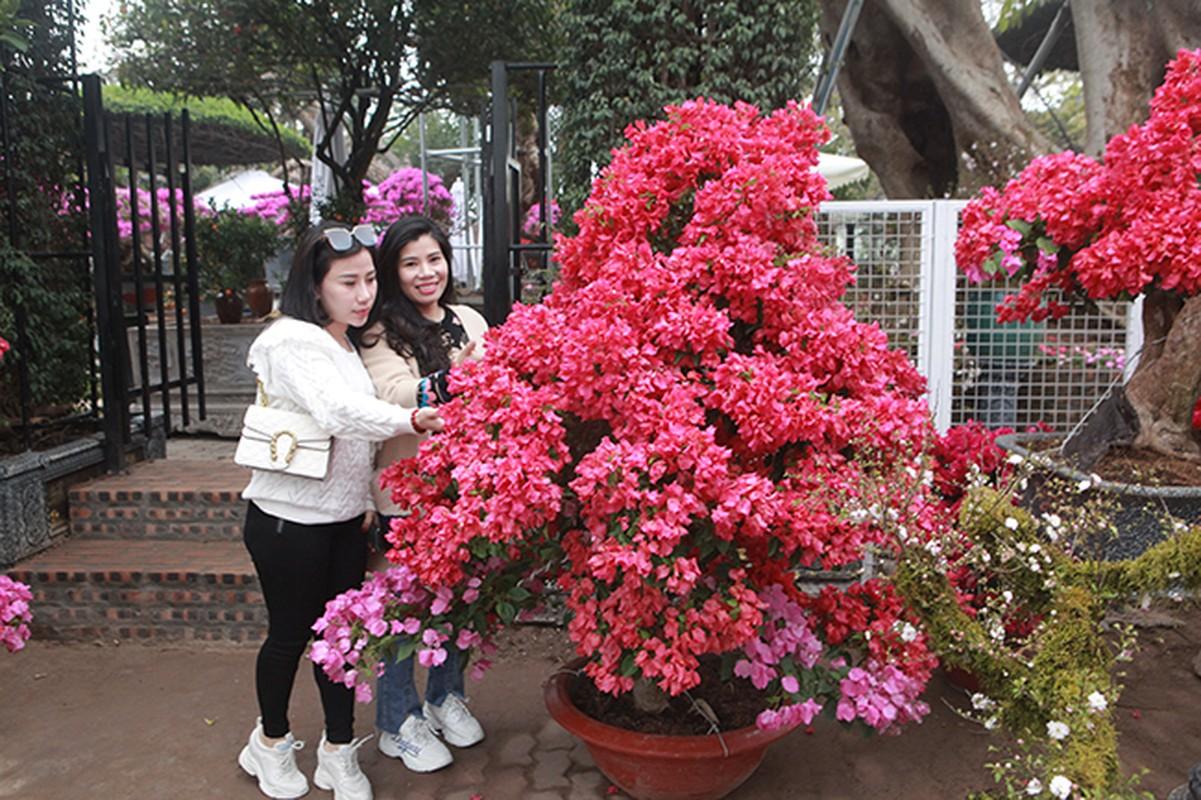 Bonsai hoa giay Thai Lan hong ruc, gia chuc trieu van hut khach Ha thanh-Hinh-2