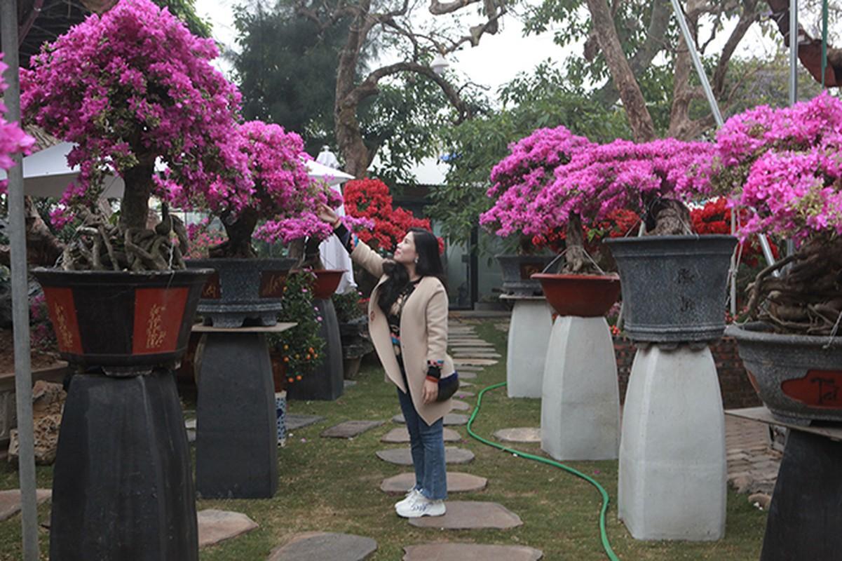 Bonsai hoa giay Thai Lan hong ruc, gia chuc trieu van hut khach Ha thanh-Hinh-3