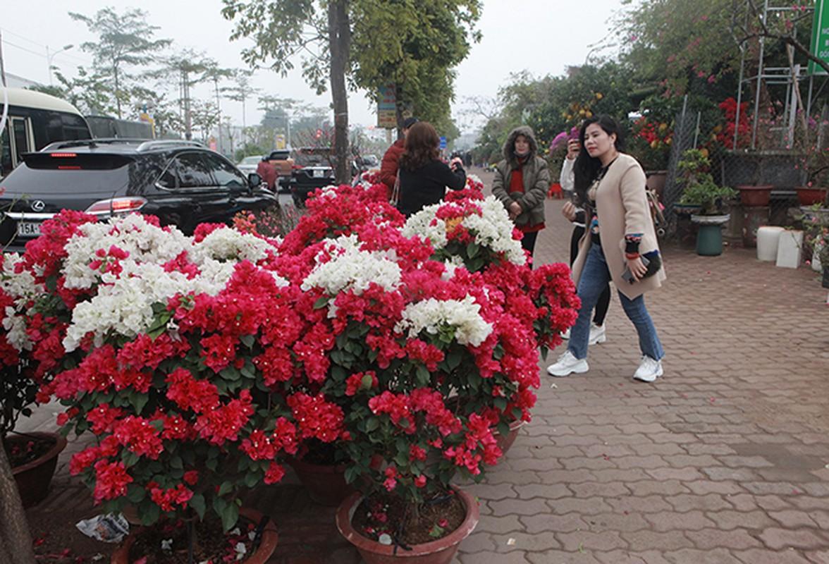 Bonsai hoa giay Thai Lan hong ruc, gia chuc trieu van hut khach Ha thanh-Hinh-8