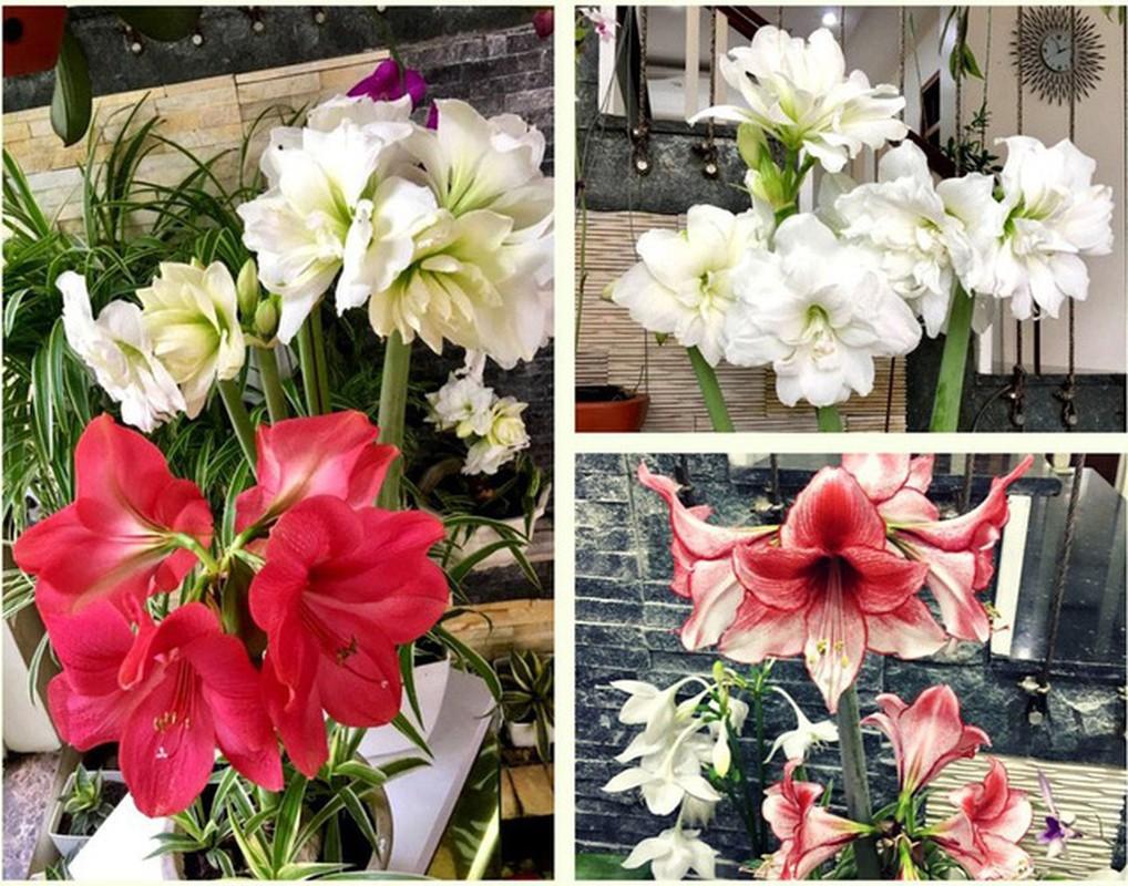 Ngoi nha nhin dau cung thay hoa no cua ca si Bich Phuong-Hinh-10