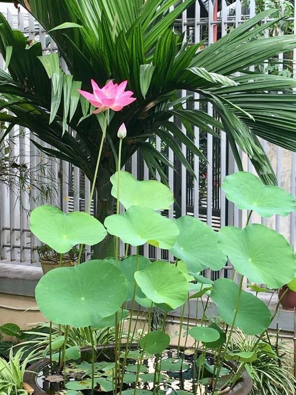 Ngoi nha nhin dau cung thay hoa no cua ca si Bich Phuong-Hinh-11