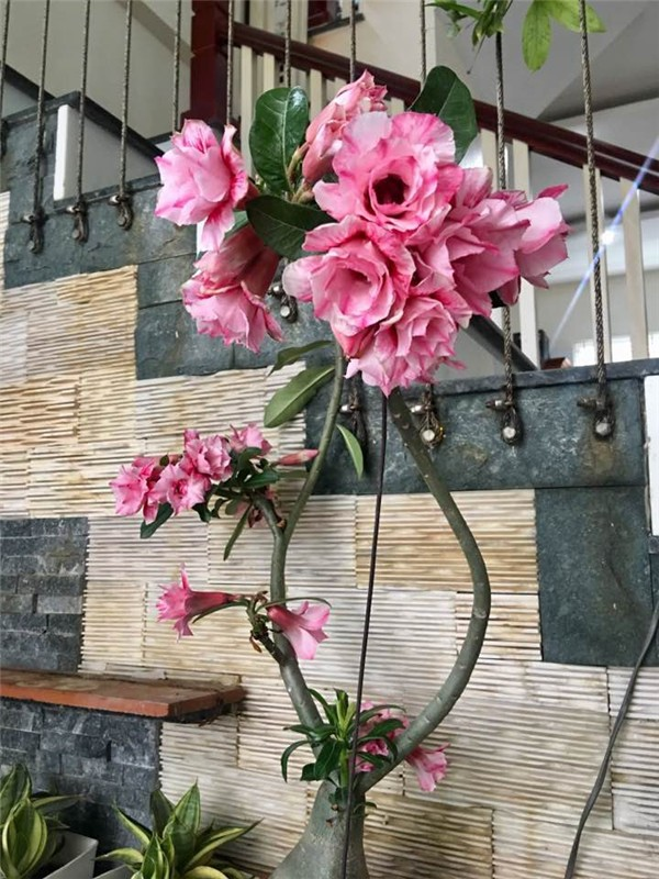 Ngoi nha nhin dau cung thay hoa no cua ca si Bich Phuong-Hinh-13