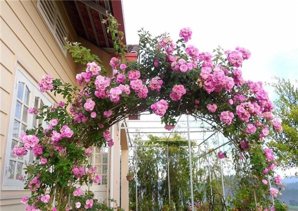 Ngoi nha nhin dau cung thay hoa no cua ca si Bich Phuong-Hinh-2