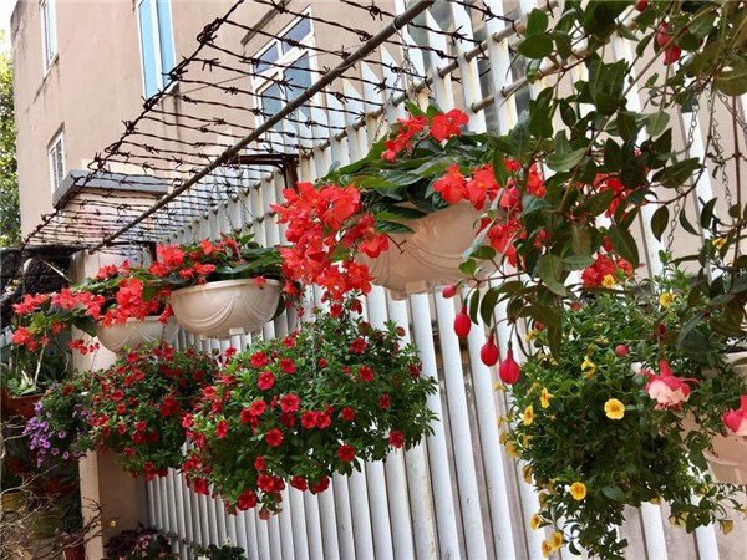 Ngoi nha nhin dau cung thay hoa no cua ca si Bich Phuong-Hinh-4