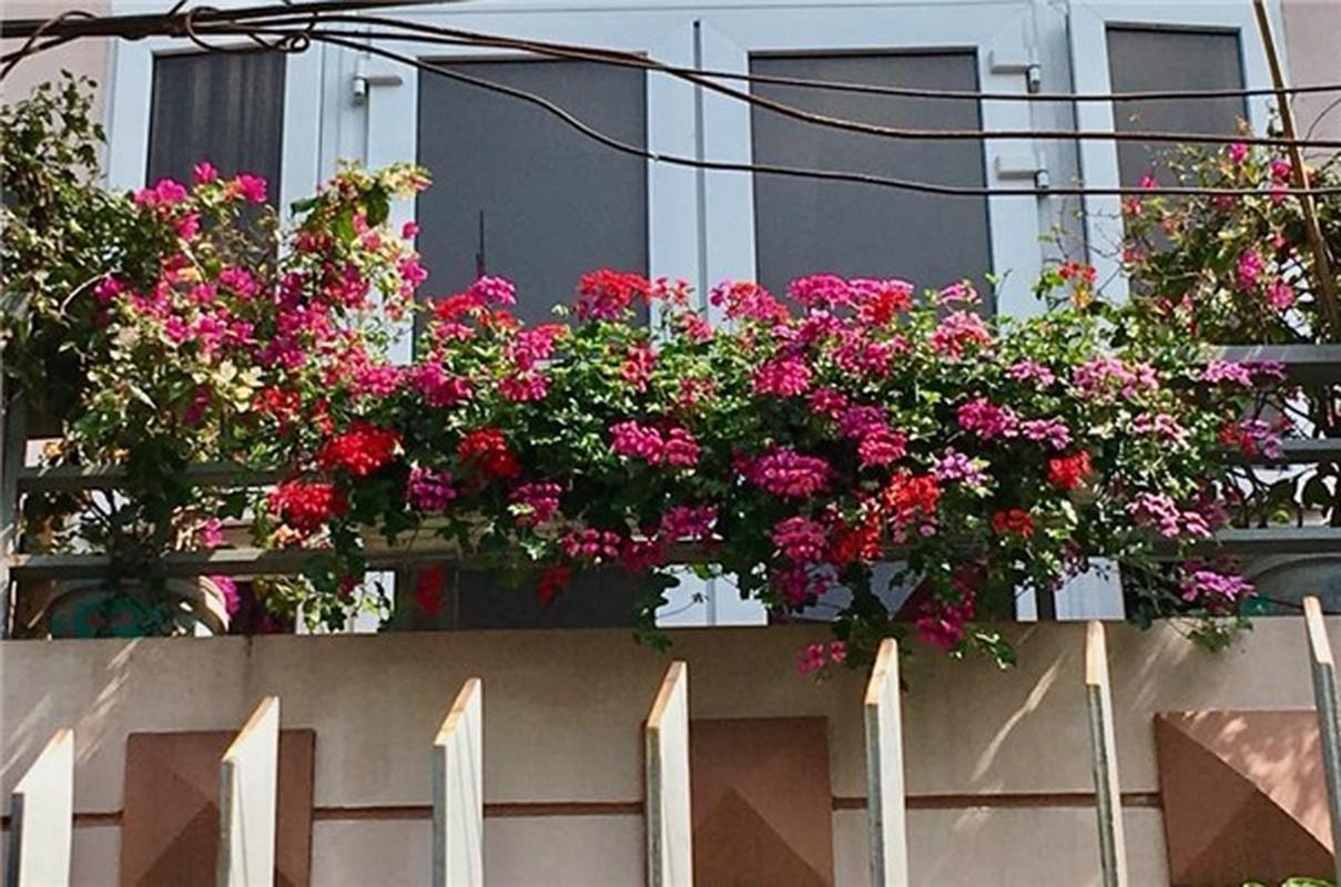Ngoi nha nhin dau cung thay hoa no cua ca si Bich Phuong-Hinh-5
