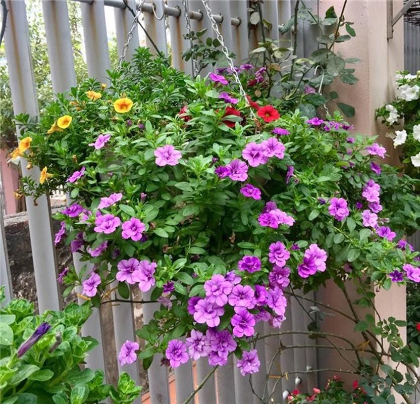 Ngoi nha nhin dau cung thay hoa no cua ca si Bich Phuong-Hinh-7