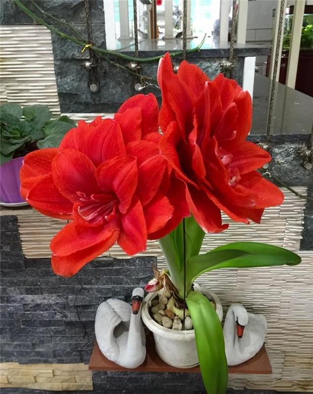 Ngoi nha nhin dau cung thay hoa no cua ca si Bich Phuong-Hinh-8
