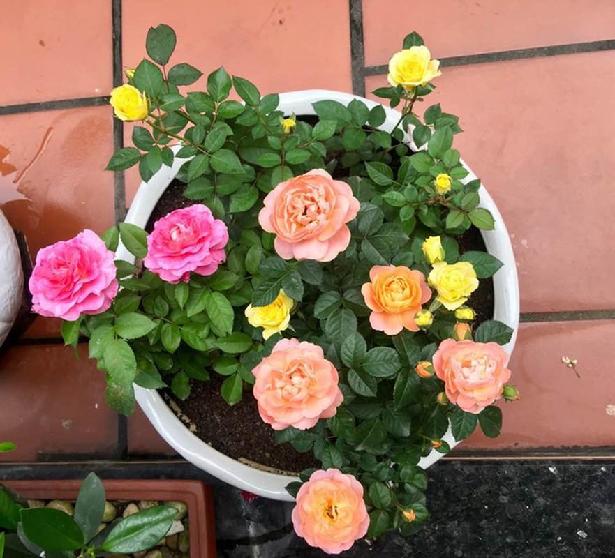 Ngoi nha nhin dau cung thay hoa no cua ca si Bich Phuong-Hinh-9