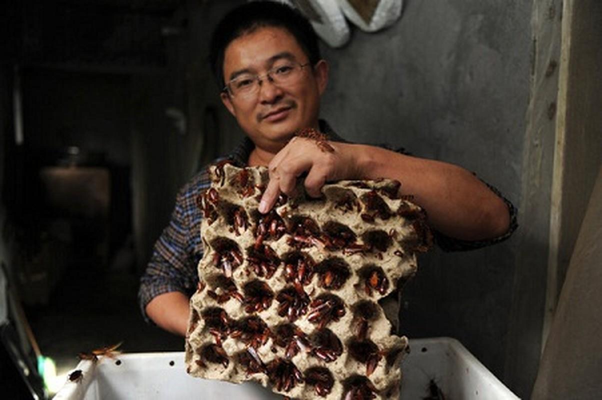 Kinh di voi mon an tu gian - dac san cua Trung Quoc-Hinh-2