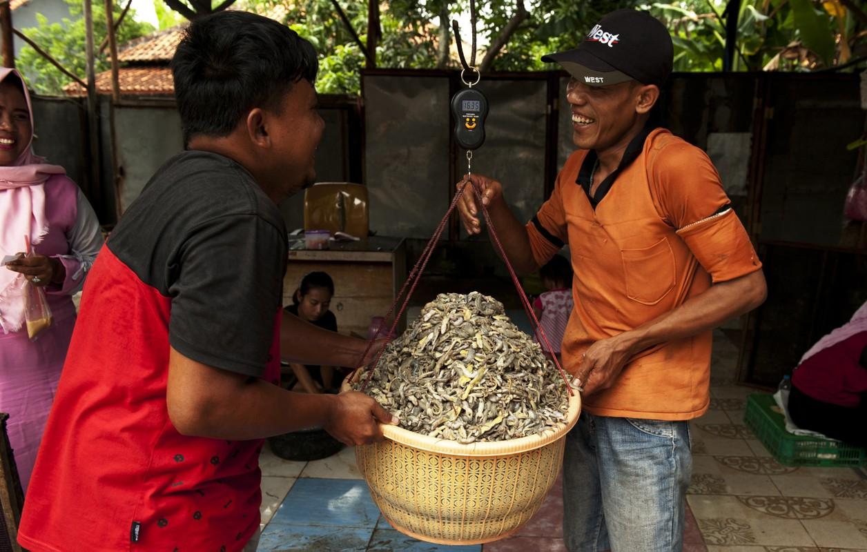 """Khiep via"" dac san than lan kho boc mui tanh ngom cua Indonesia-Hinh-3"