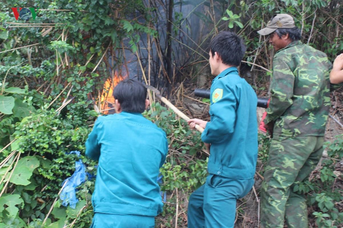 Da Nang: Chay lon tai rung dac dung Nam Hai Van-Hinh-8