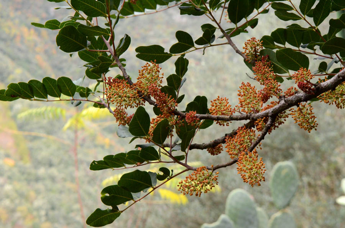 Kham pha soc loai cay co hoa mui nhu tinh dich dan ong-Hinh-10