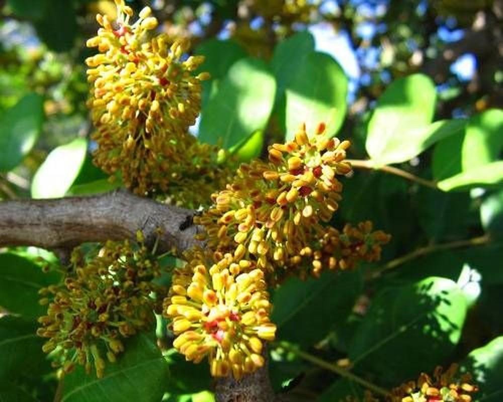 Kham pha soc loai cay co hoa mui nhu tinh dich dan ong