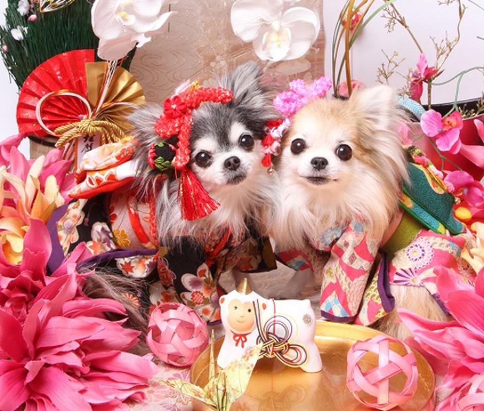 Chet me voi dan cho Nhat Ban dien kimono don nam moi-Hinh-15