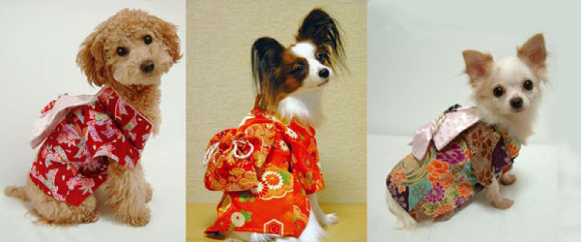 Chet me voi dan cho Nhat Ban dien kimono don nam moi-Hinh-2