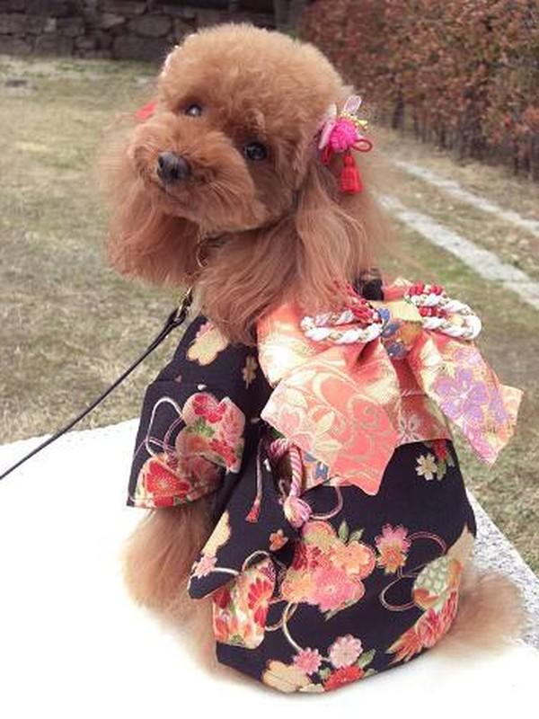 Chet me voi dan cho Nhat Ban dien kimono don nam moi-Hinh-3