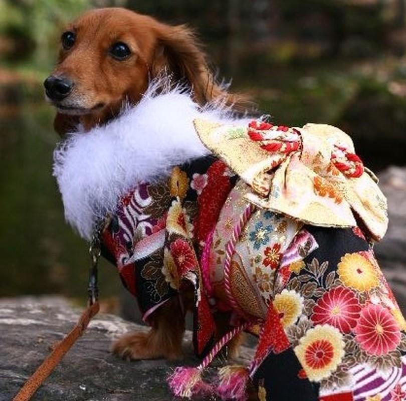 Chet me voi dan cho Nhat Ban dien kimono don nam moi-Hinh-4