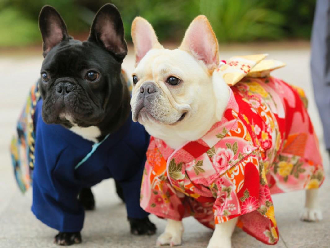 Chet me voi dan cho Nhat Ban dien kimono don nam moi-Hinh-5