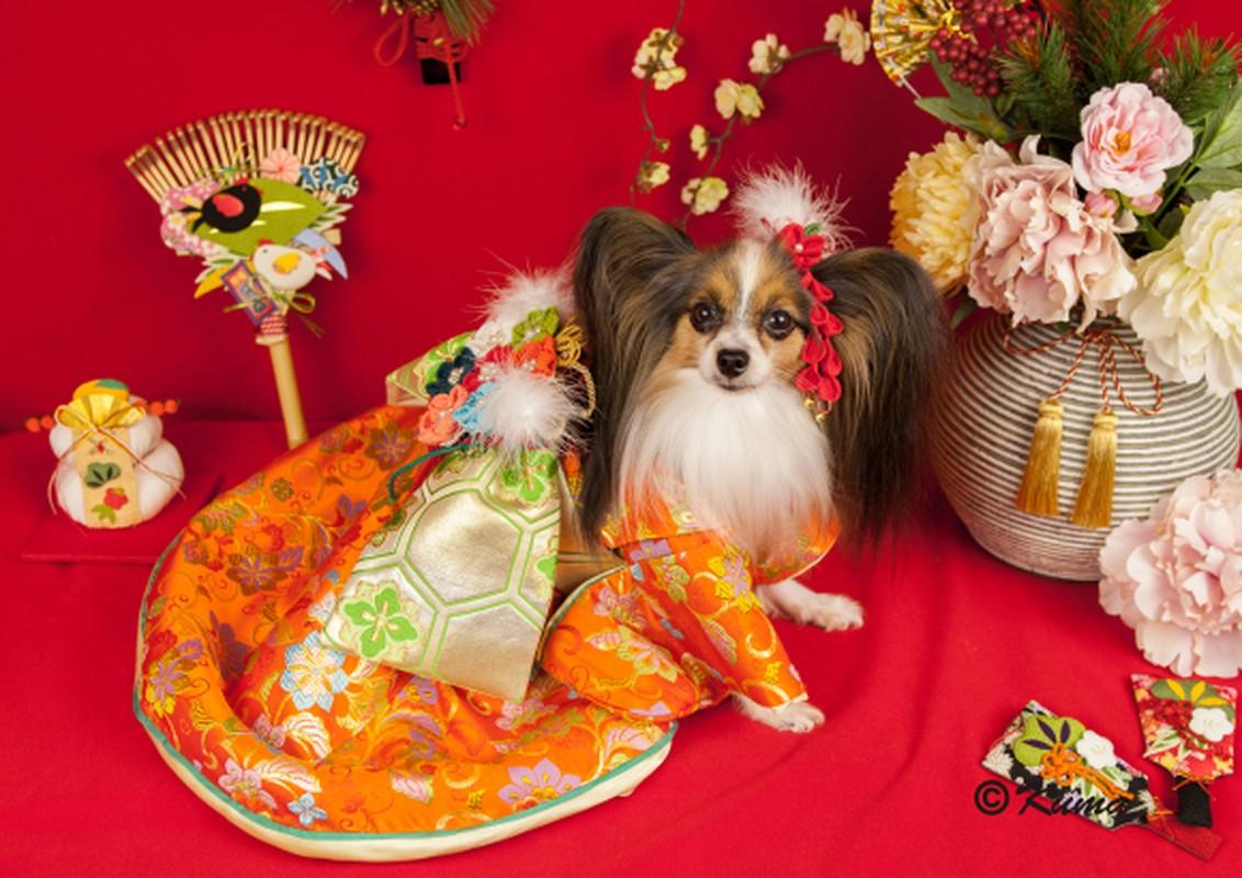 Chet me voi dan cho Nhat Ban dien kimono don nam moi-Hinh-6
