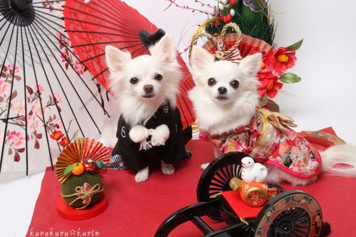 Chet me voi dan cho Nhat Ban dien kimono don nam moi-Hinh-7