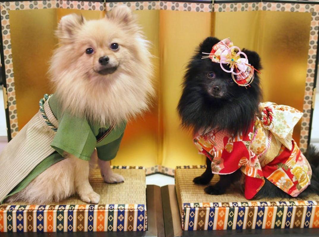 Chet me voi dan cho Nhat Ban dien kimono don nam moi-Hinh-8