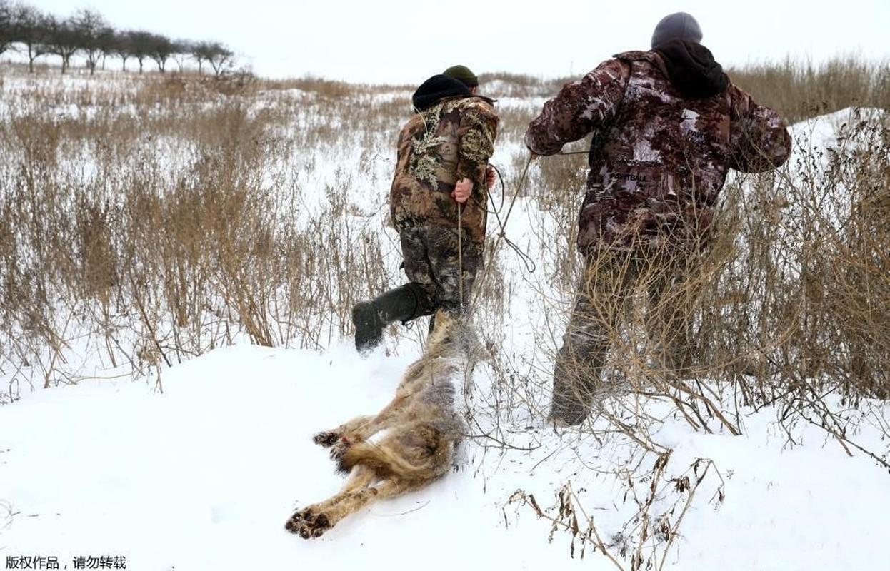 Ghe ron canh bat giet soi o khu vuc hoang da o Ukraina-Hinh-7