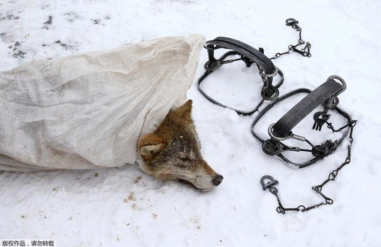 Ghe ron canh bat giet soi o khu vuc hoang da o Ukraina-Hinh-9