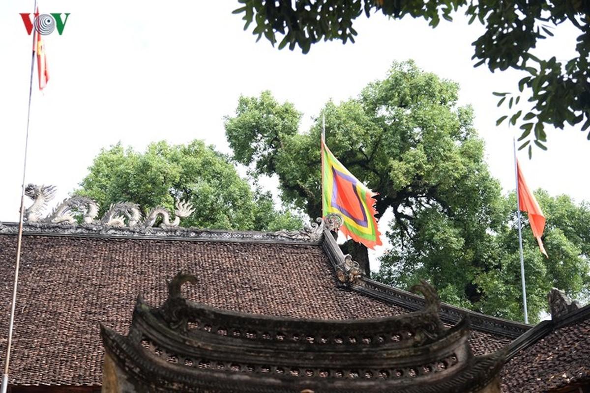 Chiem nguong cay Da Huong nghin nam tuoi o Bac Giang-Hinh-12