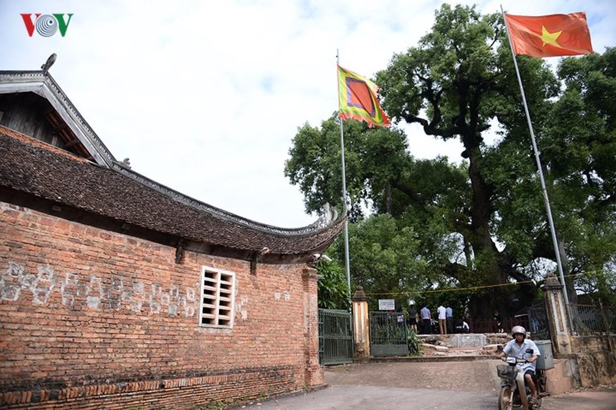 Chiem nguong cay Da Huong nghin nam tuoi o Bac Giang