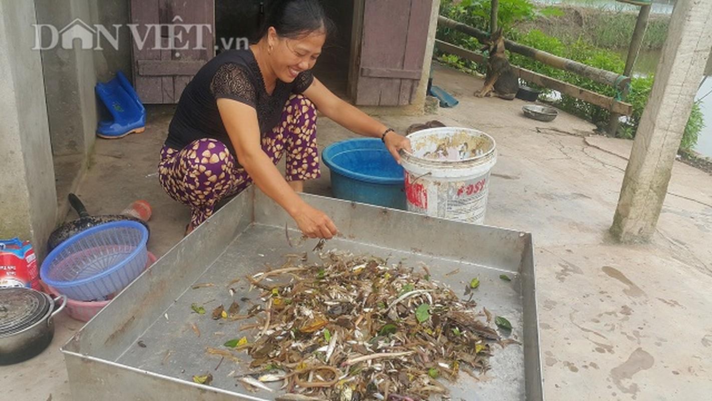 San dac san tom dat be tin hin kiem tien trieu moi ngay o Ninh Binh-Hinh-10