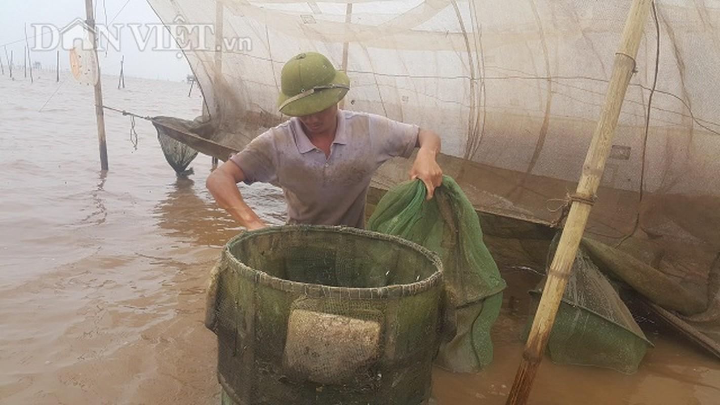 San dac san tom dat be tin hin kiem tien trieu moi ngay o Ninh Binh-Hinh-3