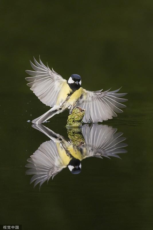 Chim nho sung so khi nhin