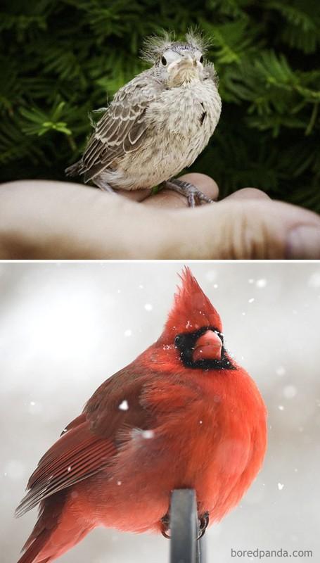 Choang vang nhung loai chim