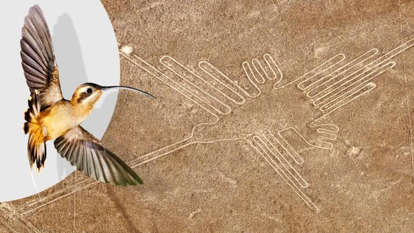 Cuc sot: Duong ke Nazca cuoi cung da duoc giai ma?-Hinh-4