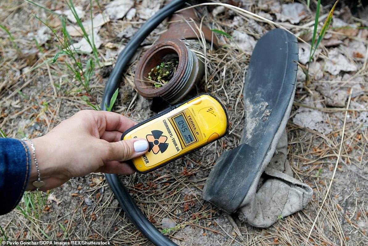 Vi sao thuc vat o Chernobyl phat trien than ky sau tham hoa?-Hinh-6