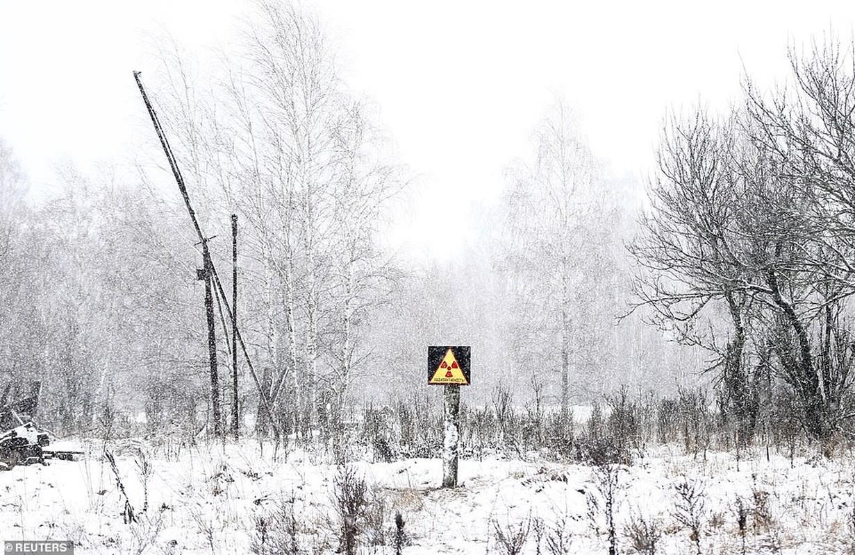 Vi sao thuc vat o Chernobyl phat trien than ky sau tham hoa?-Hinh-7